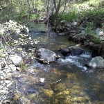 We worked next to a beautiful, clear creek in the Sierra Nevada foothills.