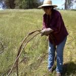 Lois Conner coils grapevine for transport