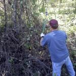 Jared Dahl Aldern cuts grapevines